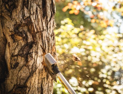 How to Become a Qualified Tree Arborist in Sydney